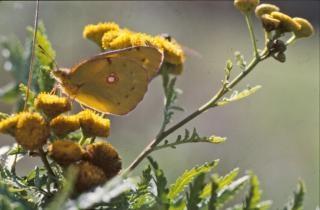 Borboletas, insetos, bichos
