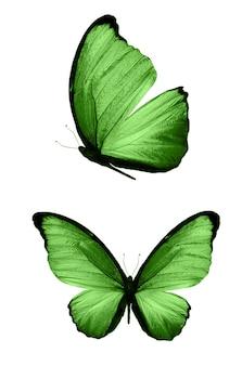 Borboletas verdes isoladas no fundo branco. mariposas tropicais. insetos para design. tintas aquarela