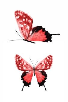 Borboletas vermelhas isoladas no fundo branco. mariposas tropicais. insetos para design. tintas aquarela