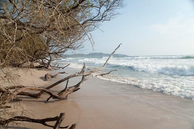 Borda da floresta na praia com troncos na areia