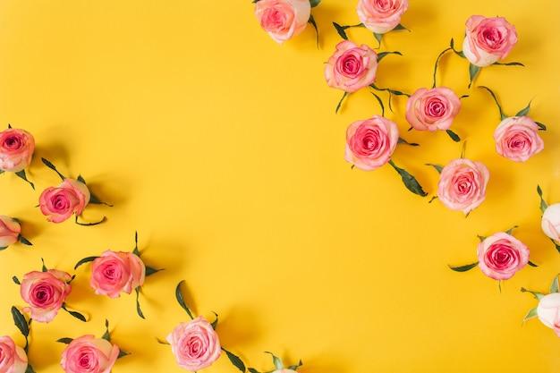 Borda da moldura de botões de flores de rosa rosa em amarelo
