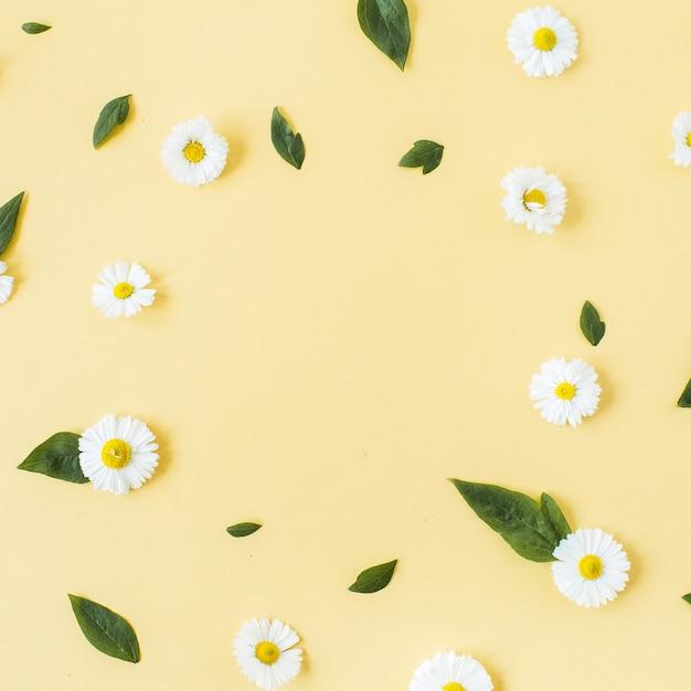 Borda da moldura do padrão de flores de margarida de camomila branca em amarelo