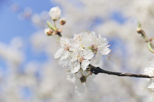 Borda da primavera ou fundo com flor