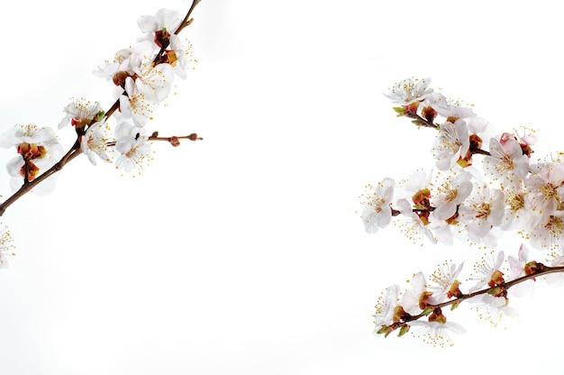 Borda de flores da primavera com texto de exemplo