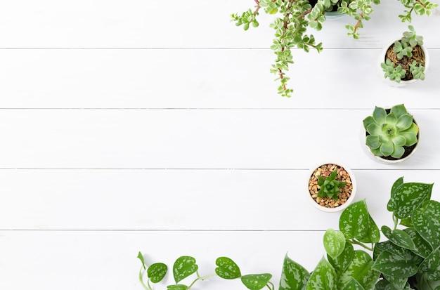 Borda de plantas de interior em fundo branco de madeira
