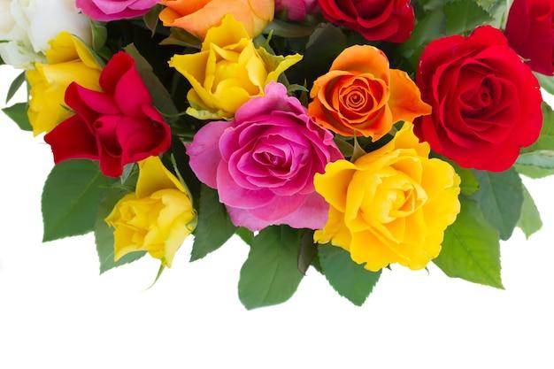 Borda de rosas frescas rosa, amarelo, laranja e vermelho