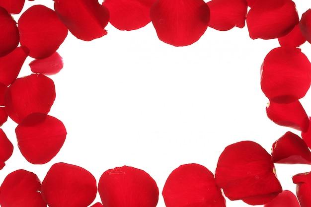 Borda do quadro de pétalas de rosa vermelha, espaço branco cópia