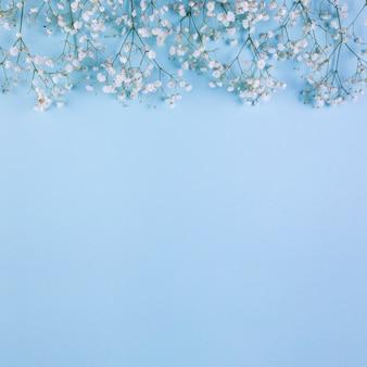Borda superior feita com flores de respiração do bebê branco sobre fundo azul