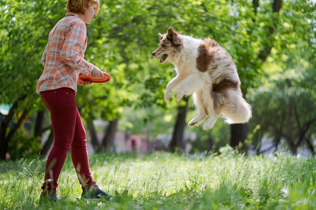 Border collie pulando no verão