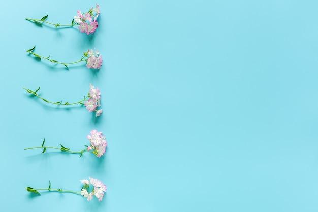 Border fez pequenas flores desabrochando com espaço de cópia. olá conceito primavera ou verão, dia das mulheres
