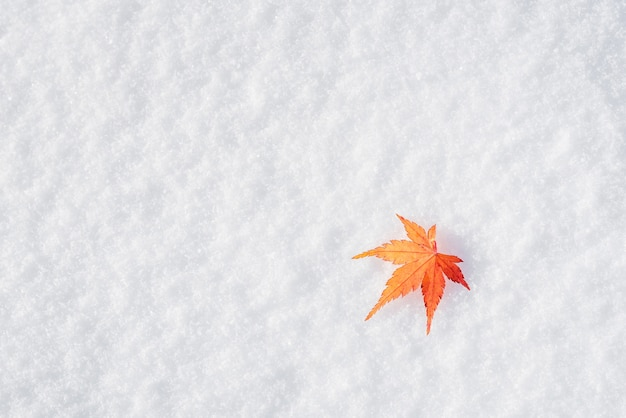 Bordo colorido deixar cair no gelo branco fresco da neve no parque público em tóquio, japão