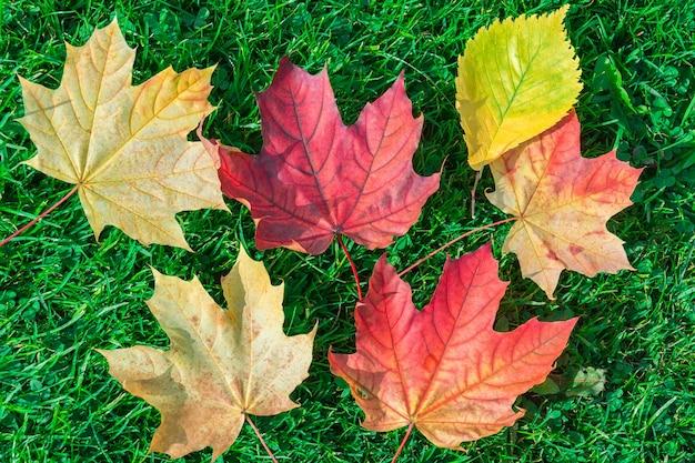 Bordo de folhas de outono na grama verde