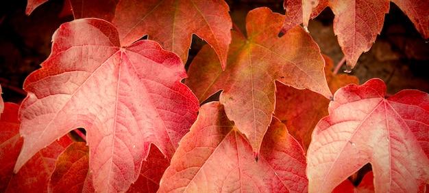 Bordo de outono parte.