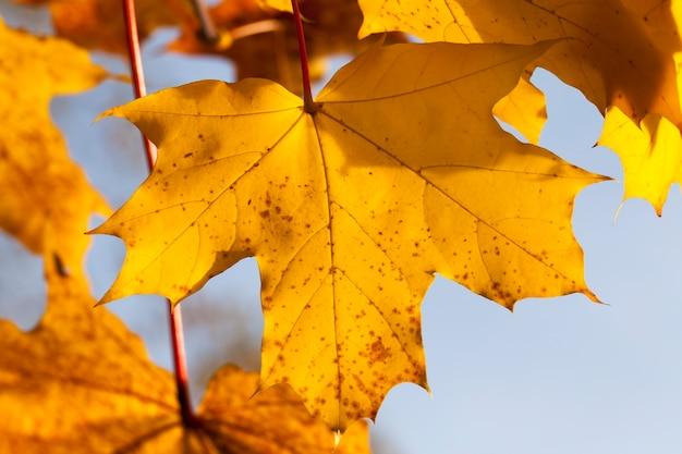 Bordo no outono