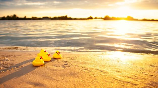 Borracha amarela patos na praia à noite.