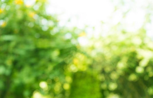 Borrado de árvores bokeh na manhã do jardim