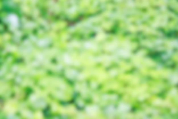 Borrado de folhas verdes