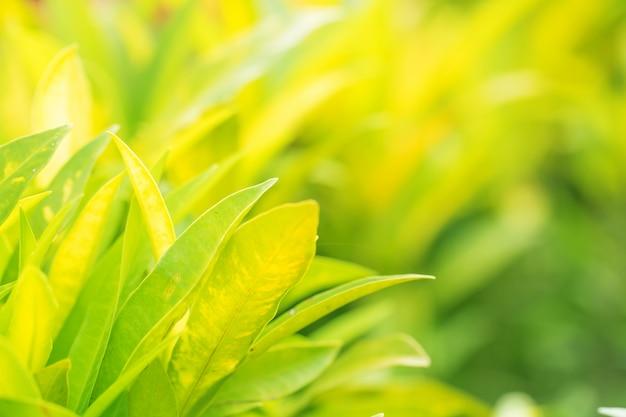 Borrão de folhas de árvore para o fundo da natureza e salvar o conceito verde