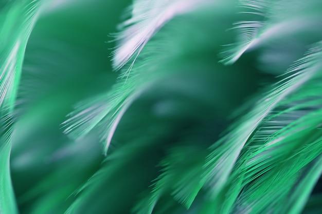 Borrão de penas de galinhas verdes