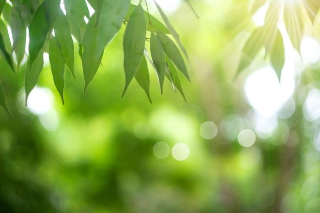 Borrão fechado acima do fundo verde da folha.