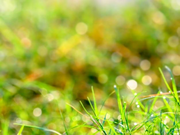 Borrão grama gota de orvalho caiu nas folhas e luz no nascer do sol