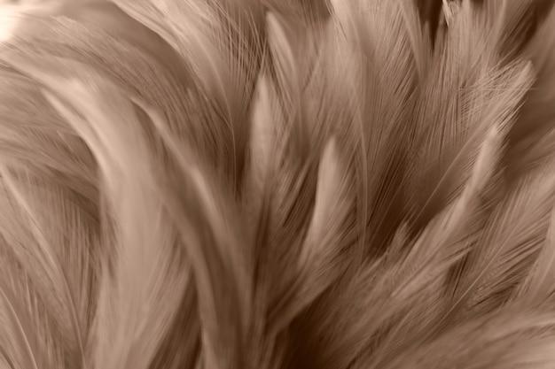 Borrão, pássaro, frangos, pena, textura, para, fundo