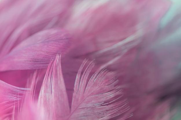 Borrão pássaro galinhas penas textura