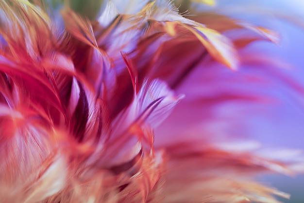 Borrão styls e cor suave de textura de penas de galinhas para plano de fundo, abstrato colorido