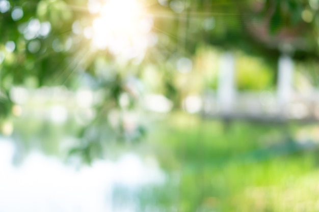 Borrar o parque verde de bokeh natural na praia e coqueiros tropicais na hora do sol.