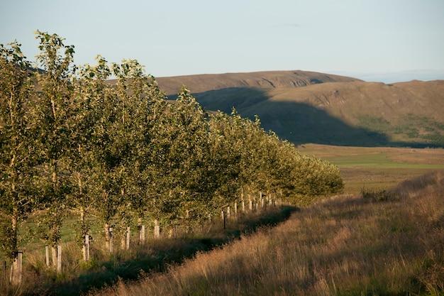 Bosque de árvores, terras agrícolas e montanhas