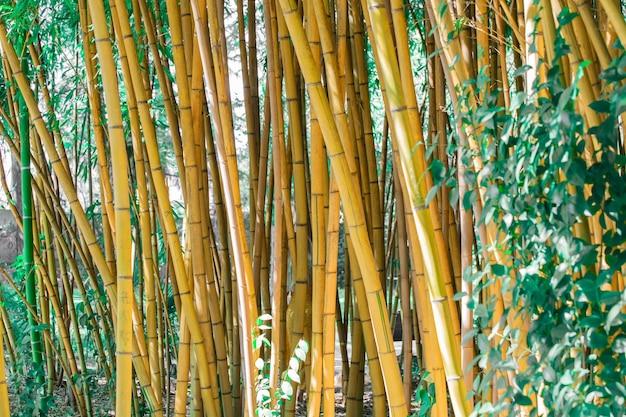 Bosque de bambu perto do fundo.
