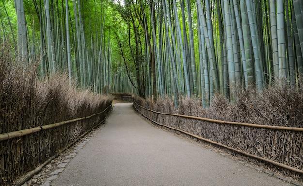 Bosque de bambu verde em arashiyama em kyoto, japão
