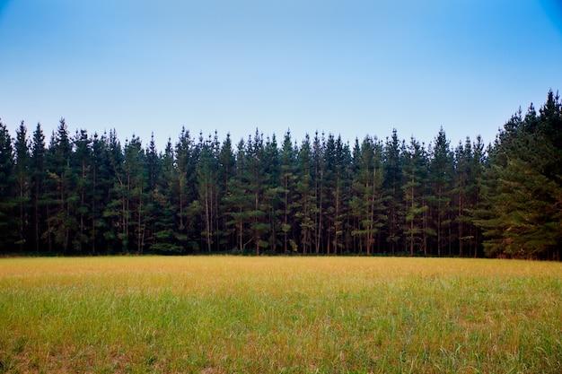 Bosque, em, espanha