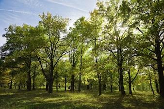 Bosque no verão