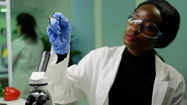 Botânico colhendo amostra de folha de placa de petri