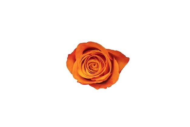 Botão de rosa laranja isolado no fundo branco. foto de alta qualidade