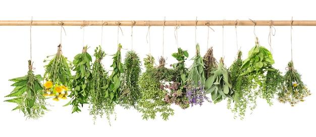 Boticário de ervas. ervas frescas penduradas isoladas no fundo branco. manjericão, alecrim, sálvia, tomilho, hortelã, orégano, manjerona, salgado, lavanda, dente de leão, camomila, urtiga