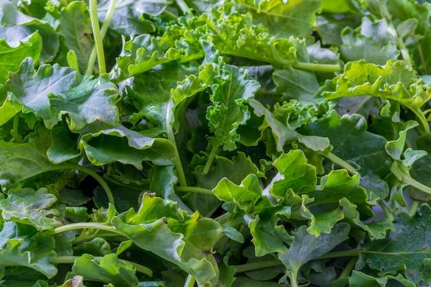 Botões de couve (repolho). salada com aspecto rústico e saudável.
