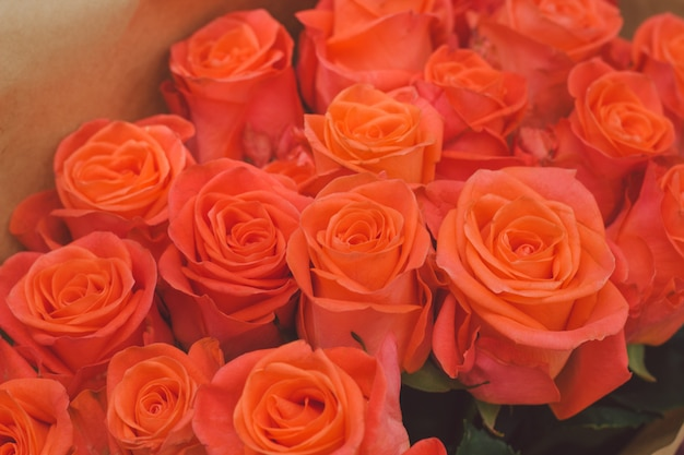 Botões de flor rosa laranja
