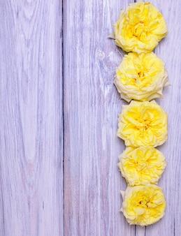Botões de floração de uma rosa amarela