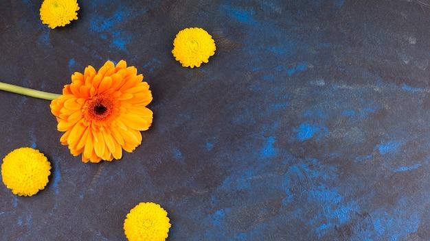 Botões de flores amarelas frescas e flor maravilhosa