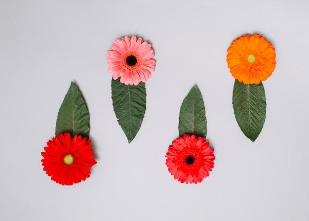 Botões de flores brilhantes com folhas verdes na mesa