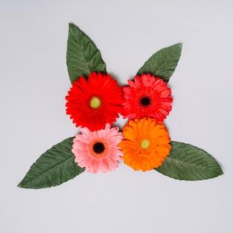 Botões de flores coloridas com folhas na mesa branca