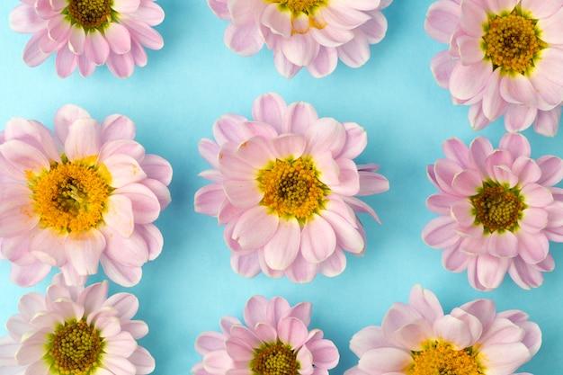 Botões de flores cor de rosa com pétalas de rosa em um fundo colorido e mínimo. conceito de fundo floral