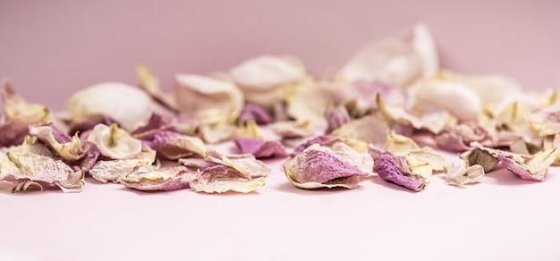 Botões de flores rosa e pétalas secas no fundo rosa macro flores pano de fundo