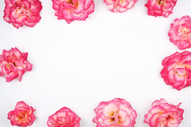 Botões de florescência de fundo de rosas cor de rosa