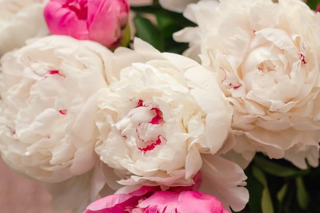 Botões de peônia branca e rosa floral cenário abstrato