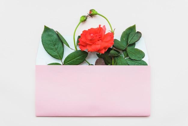 Botões de rosa e flores no envelope aberto sobre fundo branco