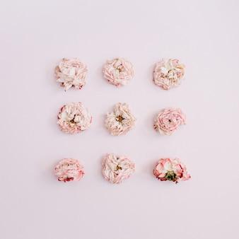 Botões de rosa secos em rosa