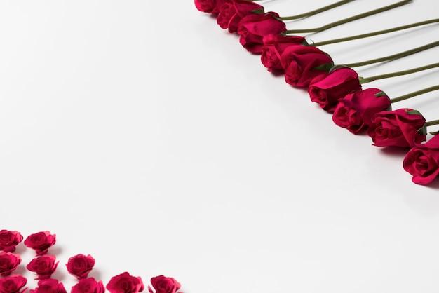 Botões de rosas vermelhas na mesa branca